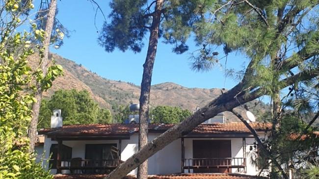 Datça Aktur'da ağaç devrildi